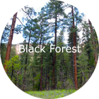 Colorado Springs Homes For Sale in Black Forest