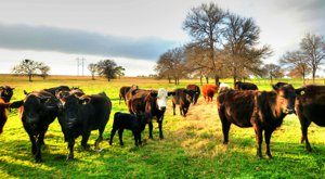 Why Have Cattle, Wildlife, Or Crops On Your Texas Ranch