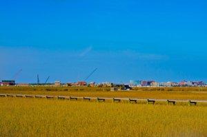 James Island Houses For Sale SC Marsh