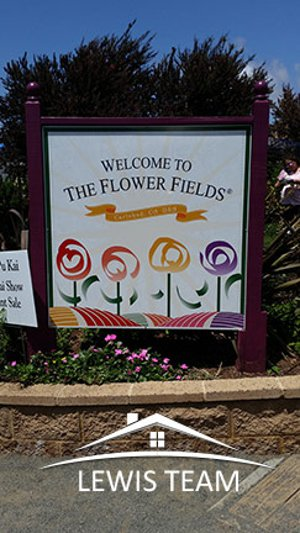 Carlsbad CA Flower Fields