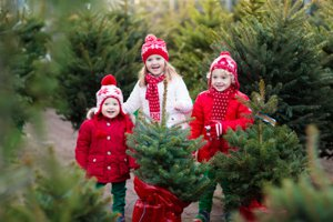 Mint Hill Christmas Tree Lot