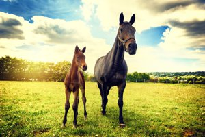 Mint Hill Equestrian