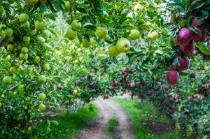 Homes For Sale Yakima Apples