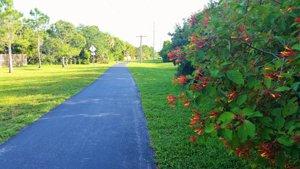 Paseos - Wide paved community walk way.