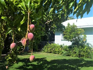 116 Point Pleasant tropical landscaping