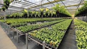Apoka Foliage Industry