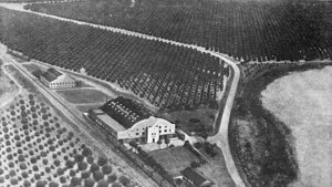 Dr. Phillips Florida Vintage Photo of Citrus Groves