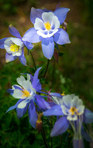 Colorado Flower Gardens Bloom on Fort Collins Real Estate