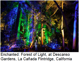Enchanted Forest of Light in Descanso Gardens, La Canada Flintridge, California