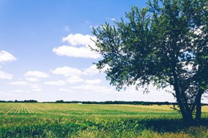Stuyvesant Homes for Sale New York farmland