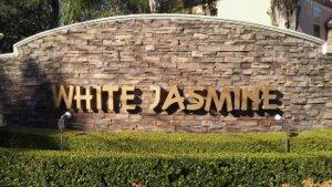 White Jasmine, Apopka, FL  32712