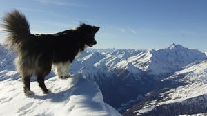 dog in mountains