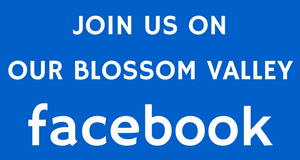 Blossom Valley Facebook Page