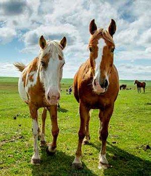 Denver Horse Property Search