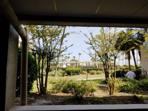 windsor court s palmetto dunes