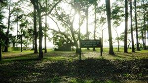baynark park sea pines