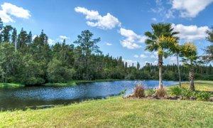 Pasco County Fl pond