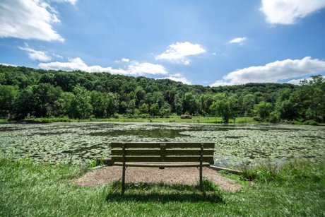 The view from a bench at Lilly Pad Lake.