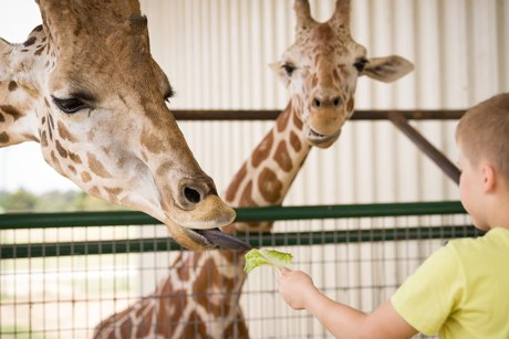 Explore Zoo Life Near Tampa Bay Homes