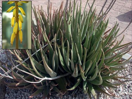 Aloe Boise Idaho