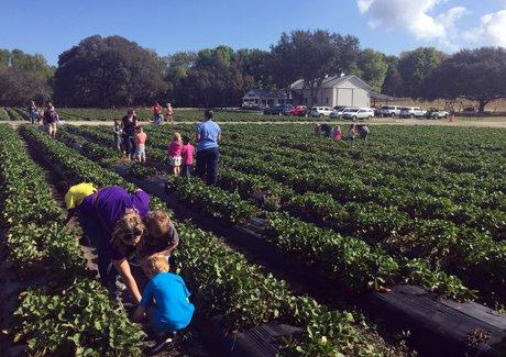Oak Haven Farms in Sorrento Florida