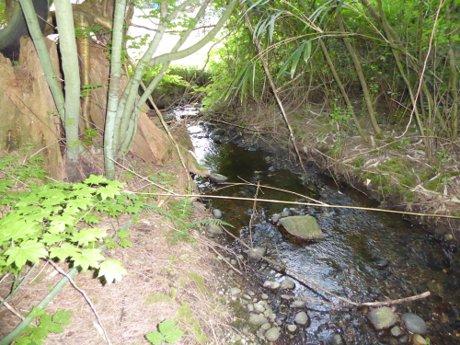 Salmon Bearing Brook Flows Through