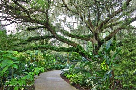 Leu Gardens Orlando Florida