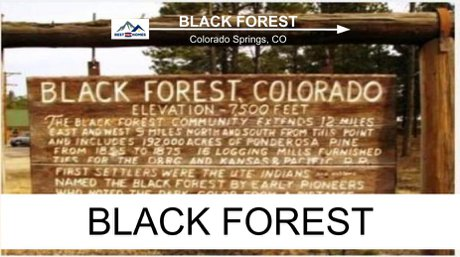 Homes for Sale in Black Forest