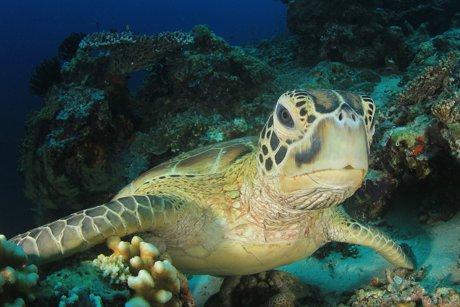 Amazing Sea Creatures Thrive Near Wailuku Homes