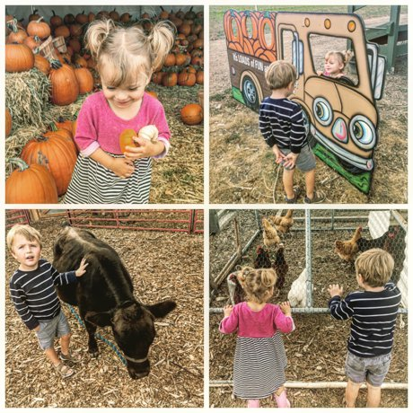 Harvest farm fall festival in wellington, family friendly activities and events in Northern Colorado | Real Estate and Lifestyle in Northern Colorado, a blog by Joanna Gyrath, Fort Collins Realtor
