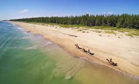 Beach for Horses