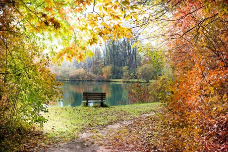 Park with a pond in autumn.