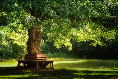 Park bench wrapped around a mature tree.