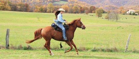 Buy and own White Mountains AZ Horse Property
