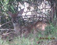 287 Bambi Drive, Shelter Cove image