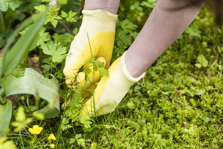 low maintenance lanscaping helps sell your simi valley home