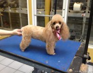 Sw Confidential - Pet Grooming Services, Miami image
