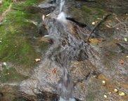 Indian Pipe Trail, Landrum image