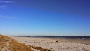 Sandhill Crane Beach
