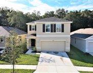 10923 Trailing Vine Drive, Tampa image