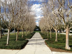 Longmeadow Park in Celebration Florida
