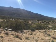 Buckthorn, Mountain Center image