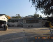 38430 Pepperweed, Squaw Valley image