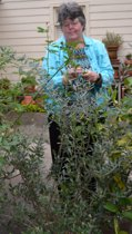 Ann Martin examines the olive tree in her driveway-side container garden