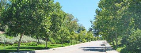 Tree lined street in Valencia Northpark