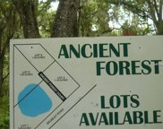 300 Ancient Forest Court, Chuluota image