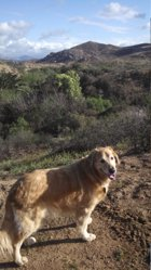 Max - in Riverside CA hills