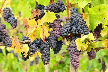 Visit Vineyards Near Medford Real Estate