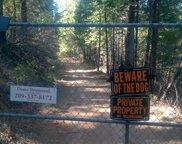 0  Wild Bee.Blaze Trail, Grizzly Flats image