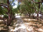 Pineview Pathways